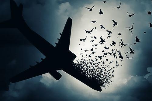 The Tragedy of Ukraine Flight Crash in Iran