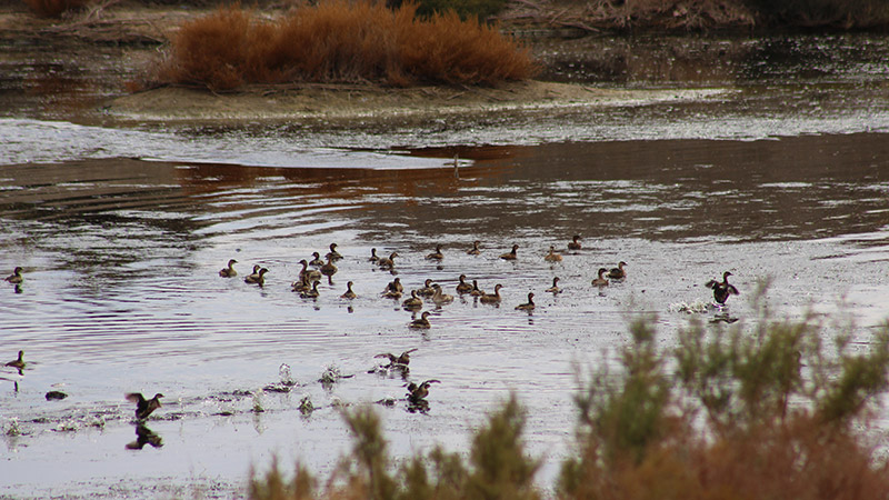 Birdwatching in Varzaneh, Cross Isfahan to Yazd