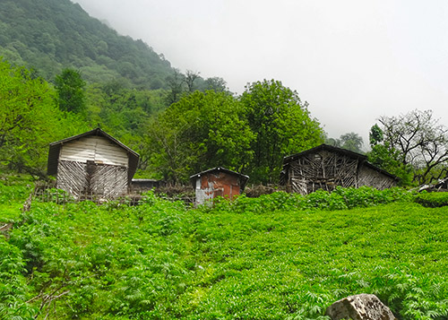 Green Hike in Hyrcanian Forests of Gilan